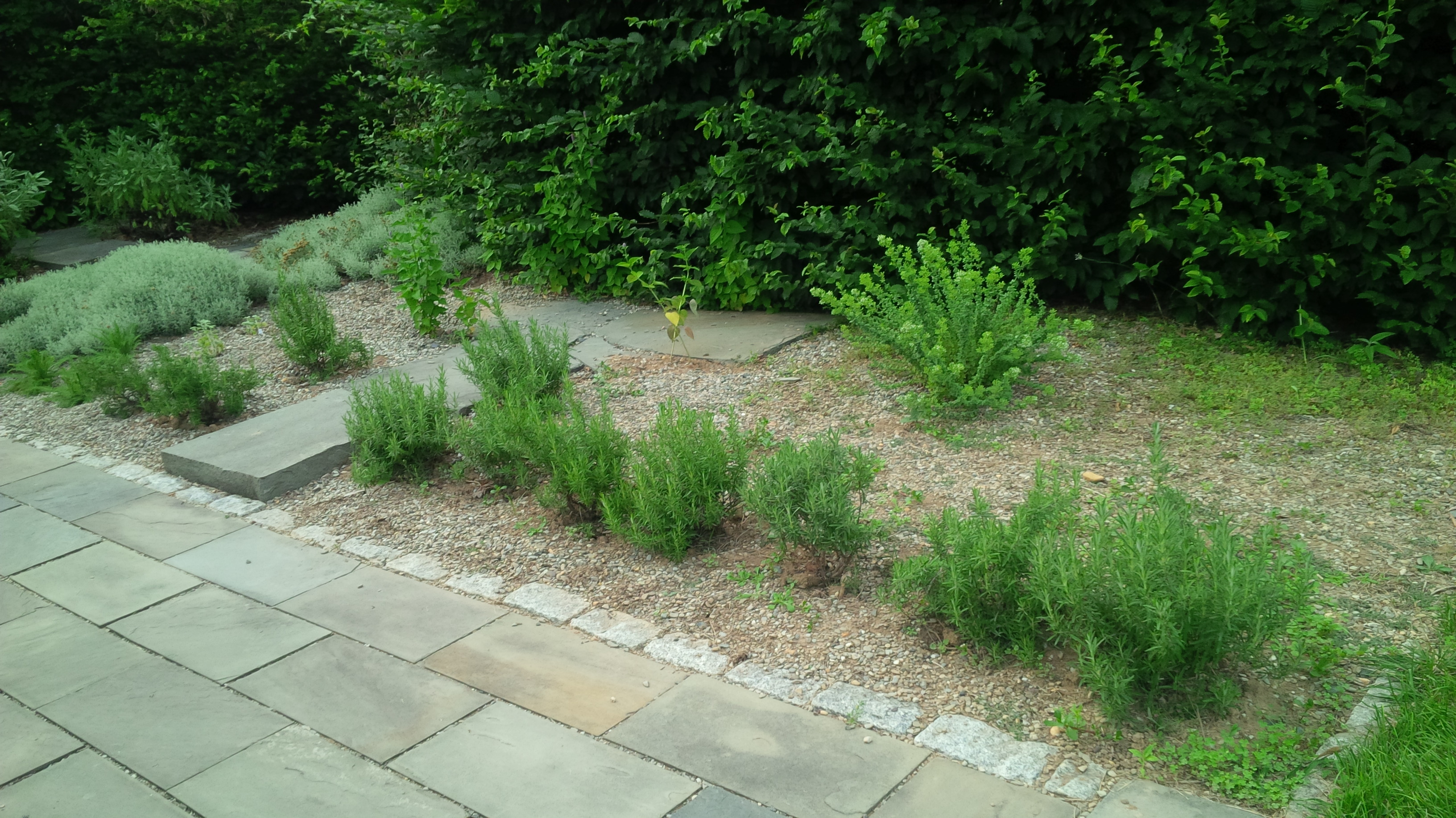 Rosemary Hedge Addition