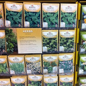 Growing Herbs From Seeds & Cuttings