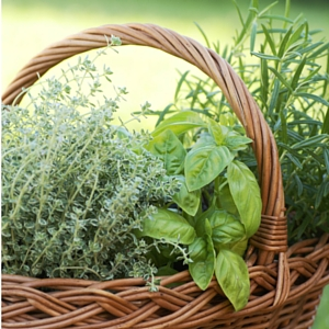 Herb Basket Square