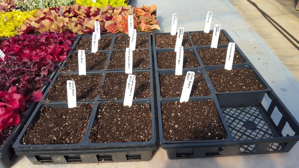 Seeding 2016