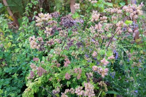 Oregano Flowers (2)