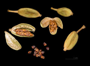cardamom-seeds-and-pods