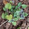 Catnip2 Feb 22